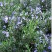 Prévention Anti-poux 11ml - Zayat Aroma