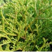 Prevention Anti-poux 32ml - Zayat Aroma